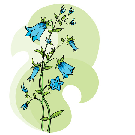 Isolated bluebell flower  Campanula  - vector background  Illustration