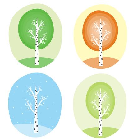 Season`s tree: birch in summer, autumn, winter, spring