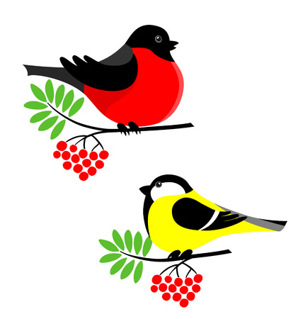 Vector illustration of bullfinch and tit. Winter birds on rowanberry branch. Illustration