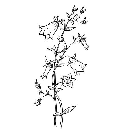 bluebell: Bluebell flower isolated on white. Campanula - vector background. Illustration