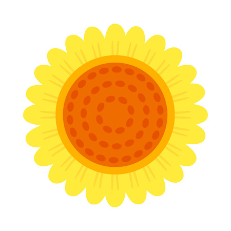 sunflower isolated: Beautiful sunflower isolated on a white color Illustration