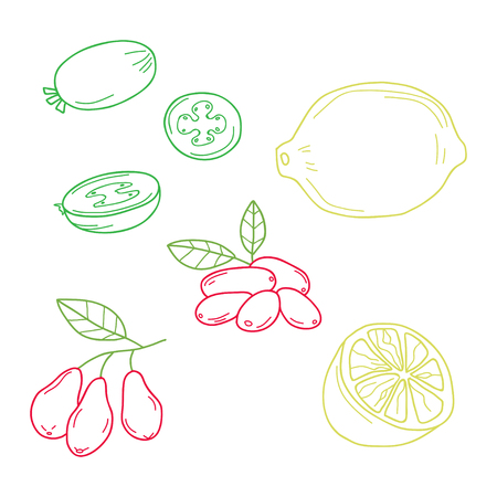 Hand drawn sketch fruits - pineapple guava, lime. dogwood berrie