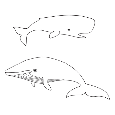 Cartoon vector sea whale and cachalot. Vector sketch Illustration
