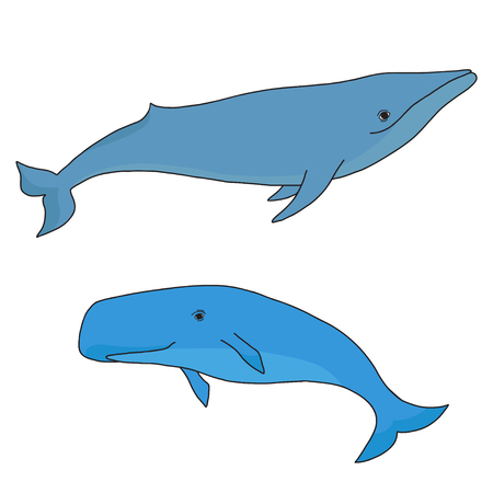 Cartoon vector sea whale and cachalot. Vector sketch doodle