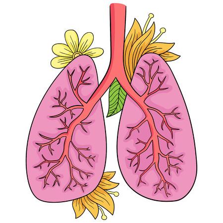 Vector illustration of lungs. Illustration