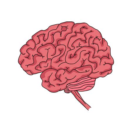 인간 두뇌의 그림입니다.