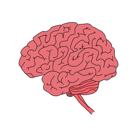 Vector illustration of human brain isolated on white background Vector Illustration