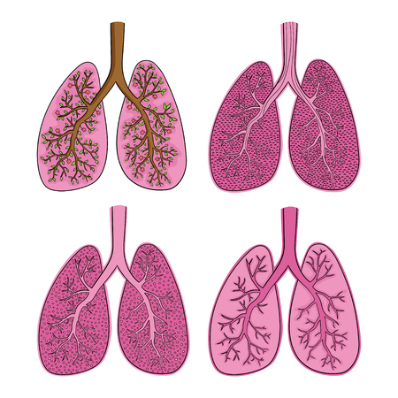 Vector set of sketch color lungs isolated on white Vettoriali