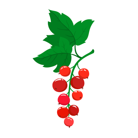 Red currant berries with green leaves icon Illustration