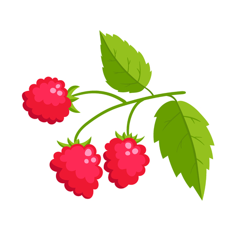 Cartoon raspberry with green leaves isolated on white background. Bright berries branch. Cute illustration used for magazine or book, poster and card design, menu cover, web pages.