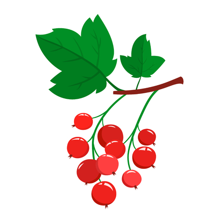 Cartoon red currant berries with green leaves isolated on white. Illustration