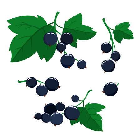 Cartoon black currant berries with green leaves isolated on white Illustration