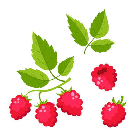 Set of cartoon raspberry with green leaves isolated on white background. Bright berries branch. Cute illustration used for magazine or book, poster and card design, menu cover, web pages.