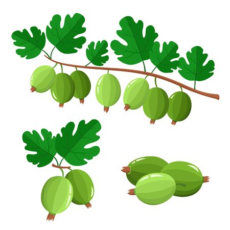 Set of cartoon juicy gooseberry with green leaves isolated on white background. Bright berries and berries branch. Cute illustration used for magazine or book, poster and card design, menu cover, web pages.
