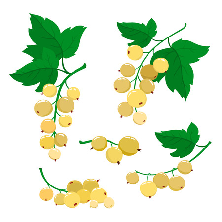 Set of cartoon white currant berries with green leaves isolated on white background. Bright berries and berries branch.