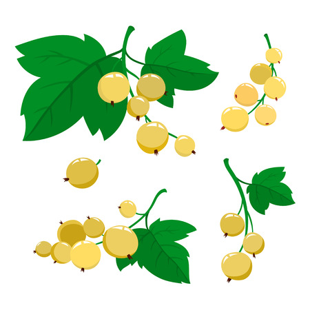 Set of cartoon white currant berries isolated on white