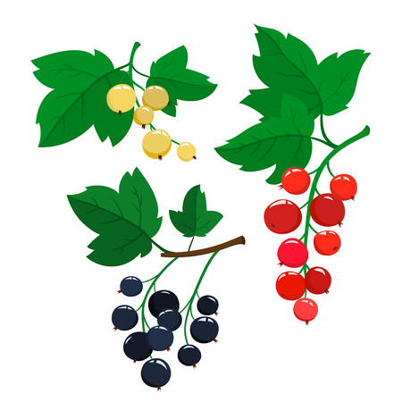 Set of cartoon red, black and white currant berries with green leaves isolated on white background. Bright berries and berries branch.