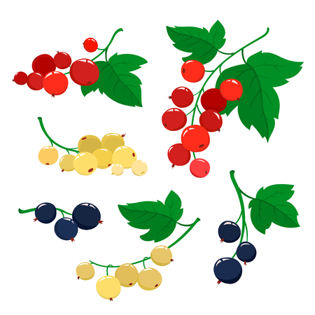 Set of cartoon red, black and white currant berries