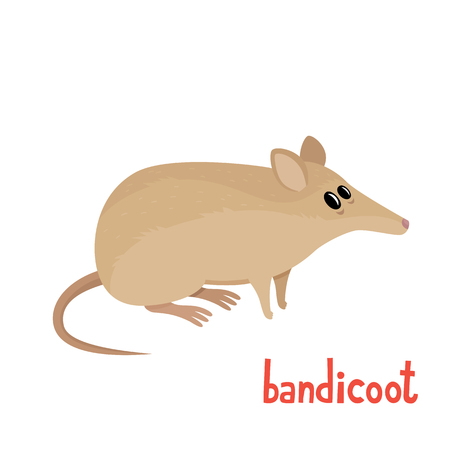 Cute little bandicoot in cartoon style. Vector illustration.