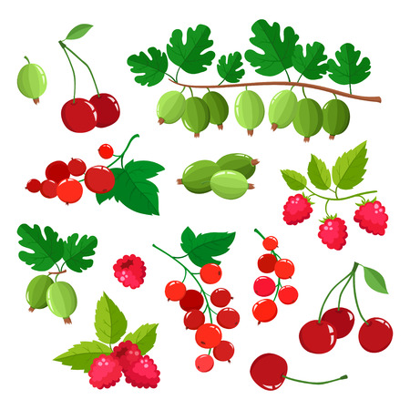 Set of cartoon raspberries, gooseberries, red currants and cherries with green leaves isolated on white. Bright berries branch. Cute illustration used for magazine, book, poster, card design, menu cover, web pages.