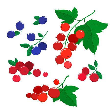 Vector set cartoon cranberries and blueberries with green leaves isolated on a white background. Bright berries branch.