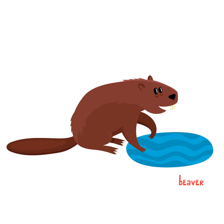 Cute beaver in cartoon style. Vector illustration of wild animal isolated on white background. Cute zoo alphabet.