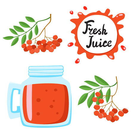 Juice with ashberry in a glass bank, vector cartoon card with fresh berries and smothie isolated on white. Red juice splashes drops.
