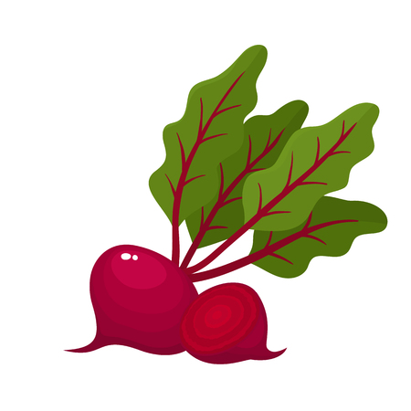 Bright vector illustration of colorful half, slice and whole of beets. Fresh cartoon vegetable isolated on white background. Illustration used for magazine, book, poster, card, menu cover, web pages.