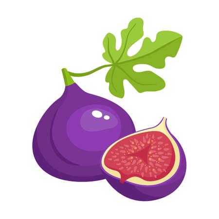 Bright vector illustration of colorful half and whole of juicy fig. Fresh cartoon fig isolated on white background. Juice or jam logotype.