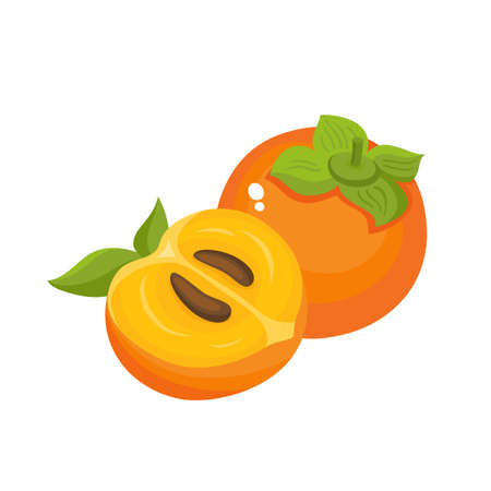 Bright vector illustration of colorful juicy persimmon.