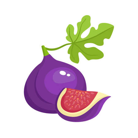 Bright vector illustration of colorful juicy fig. Stock Illustratie