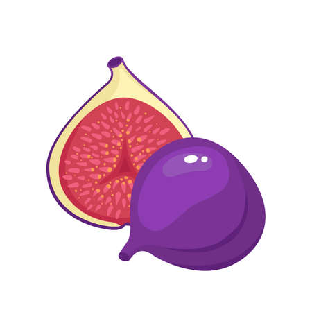 Bright vector illustration of colorful of juicy fig.