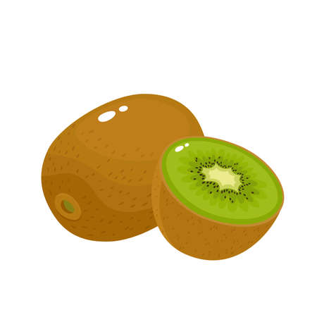 Bright vector illustration of colorful fresh kiwi isolated on white Stock Illustratie