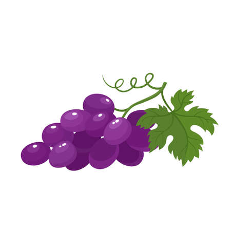 Bright vector illustration of juice grapes isolated on white background. Stock Illustratie