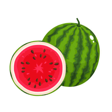 Bright vector illustration of juice watermelon isolated on white background.