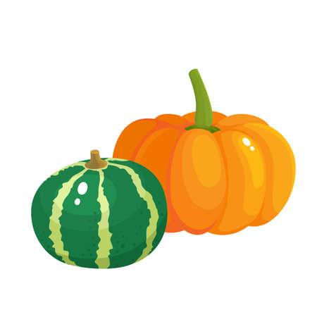 Bright vector illustration of colorful half, slice and whole of pumpkins. Fresh cartoon different vegetable isolated on white background used for magazine, book, poster, card, menu cover, web pages. Stock Illustratie