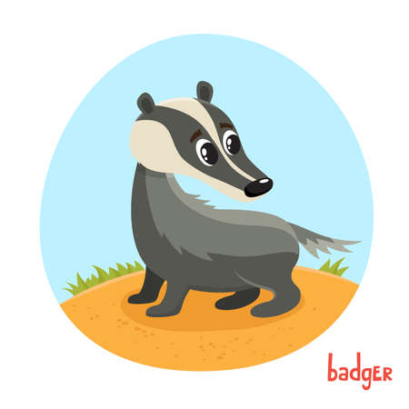 Badger in cartoon style. Vector illustration of wild animal isolated on white background. Cute zoo alphabet, letter B. Illustration used for magazine, poster, card, book, web pages. Stock Illustratie