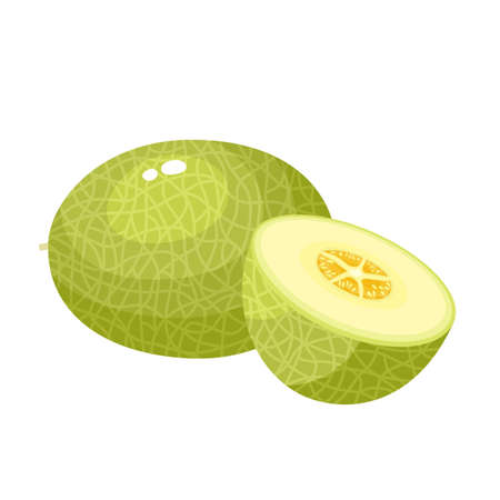 Bright vector illustration of colorful half, slice and whole of juice melon. Fresh cartoon vegetable isolated on white background.