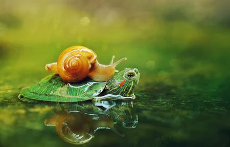 Snail And turtle Banco de Imagens