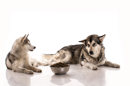 dry food: Cute dog and his favorite dry food on a white background