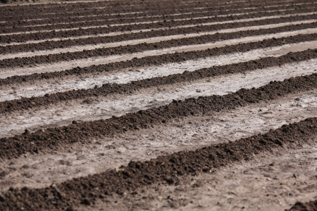 peasantry: Agricultural field ploughed, Stock Photo