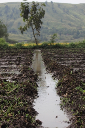 water irrigation in ploughed field photo