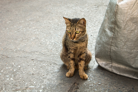 Homeless old cat face look like a baby tiger photo