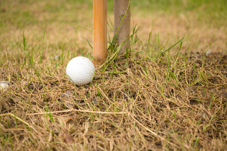 unlucky: Unlucky golf ball drop under the small tree and difficult to swing