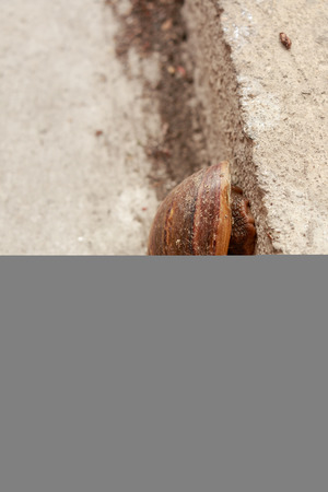slithery: Close up snail on cement in the city
