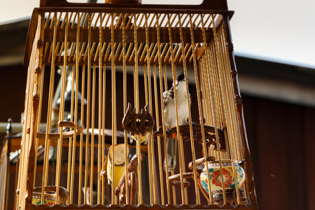 escapement: Red-whiskered Bulbul in the bird cage with sunlight Stock Photo