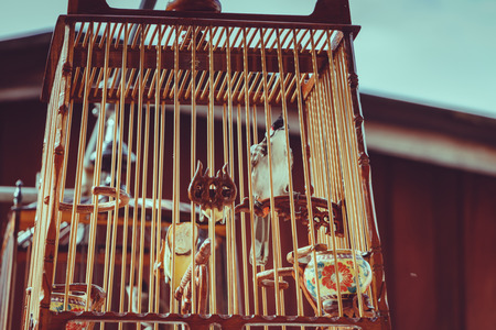 escapement: Red-whiskered Bulbul in the bird cage on vintage tone style