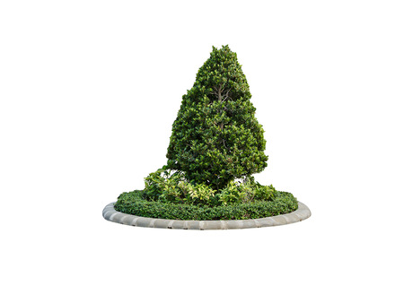 bush trimming: Tree trim for decoration in the garden on isolated