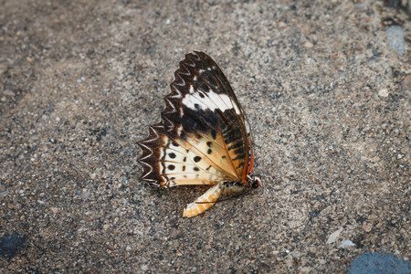 mortality: Dead Butterflies on street