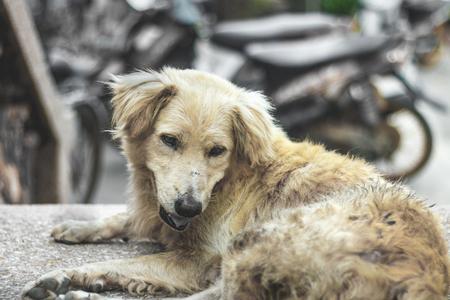 stray: Dirty homeless dog sleep on cement floor, Soft tone